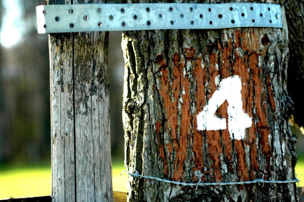 chiffre 4 écrit sur le tronc d'un arbre